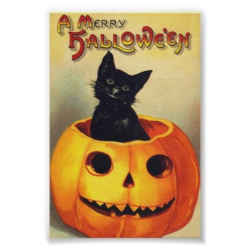 Halloween Black Cat In Pumpkin Poster